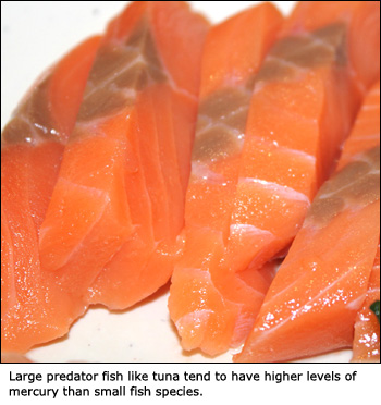 Large tuna migh have high levels of mercury. Picture of tuna steaks.