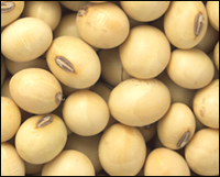 Legumes such as soybeans are high in omega-3.